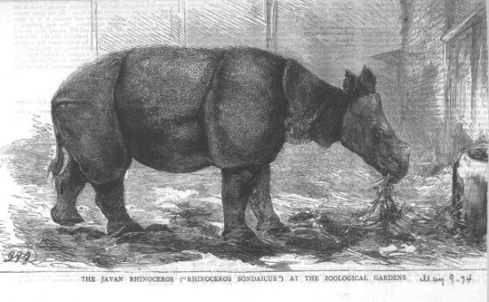 London Zoo 1874