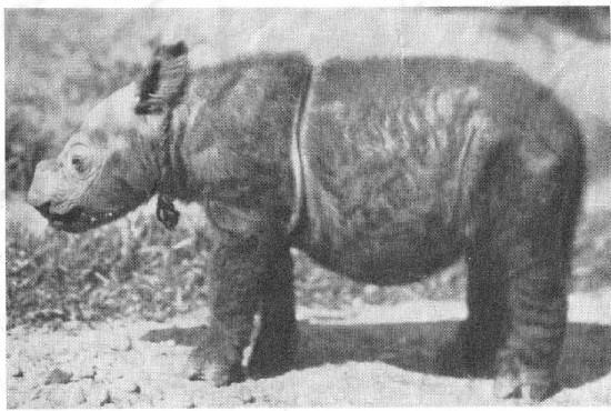 Sumatra 1928