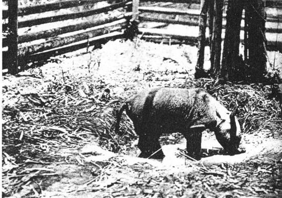 Burma 1924
