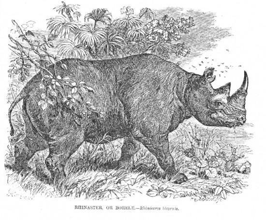 Wood 1851