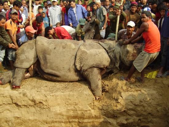 Chitwan 2007