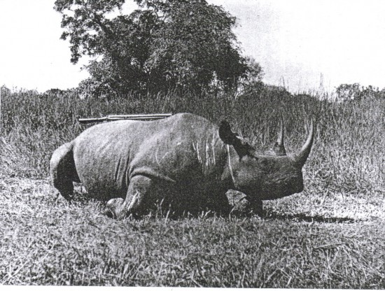 Bangweulu 33