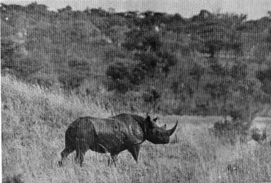 Embu 1940