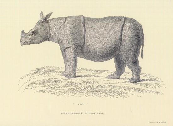 Horsfield 1824