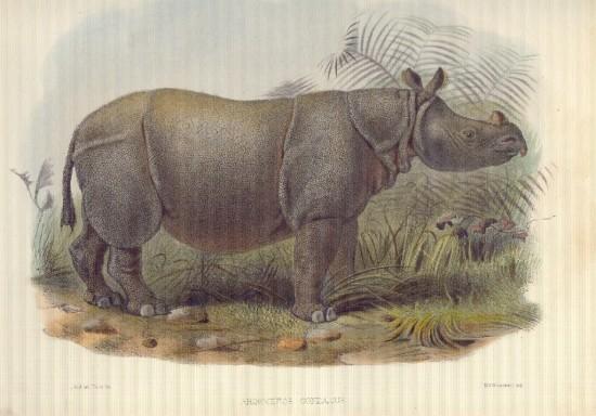 Jamrach 1877