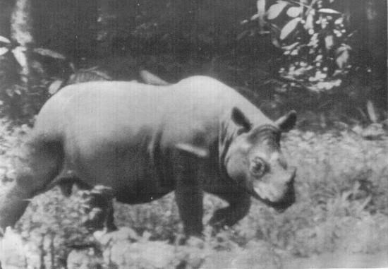 Malaysia 1939