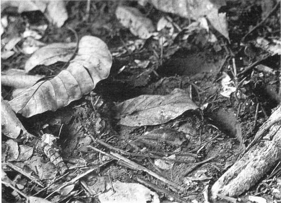 Ujung Kulon 1968