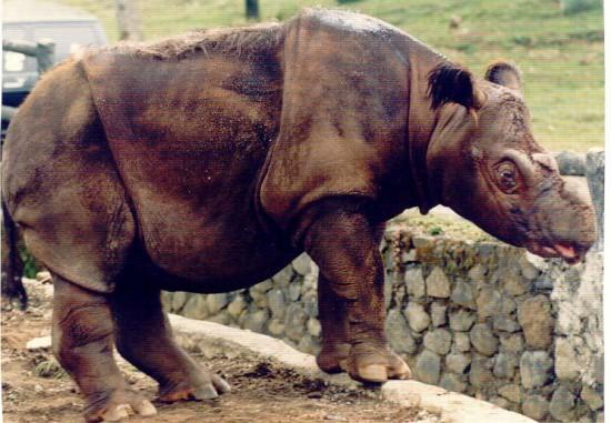 Bogor 1995