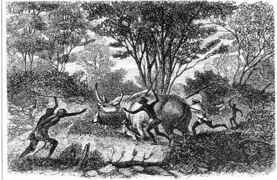 Chapman 1868