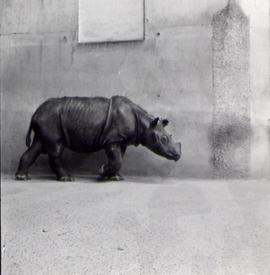 Basel 1959