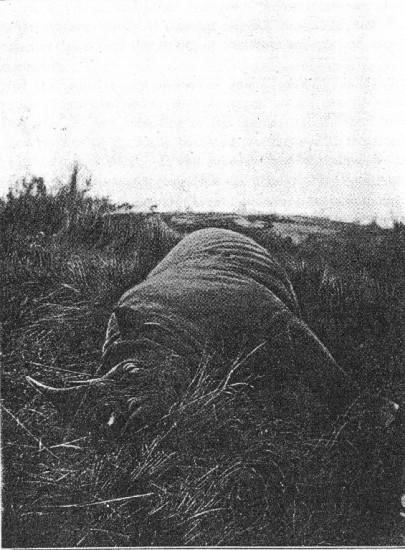 Kenya 1909