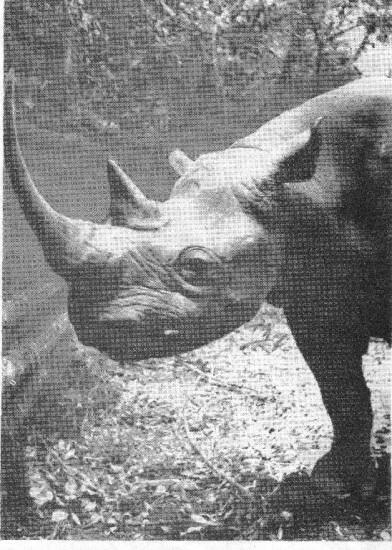 Kenya 1948