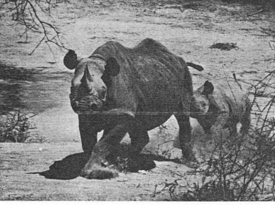 Kenya 1954