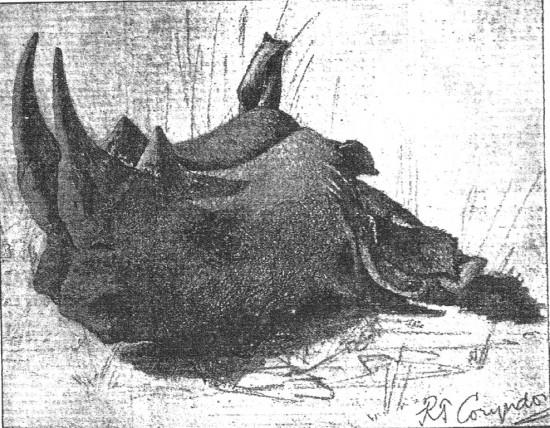 Coryndon 1894