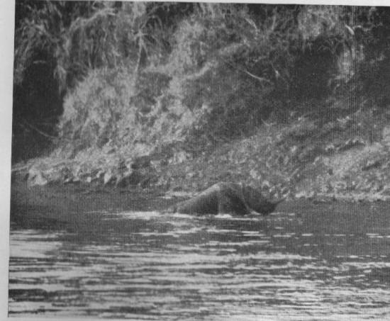 Selous 1908