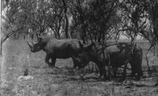 Hunter 1952