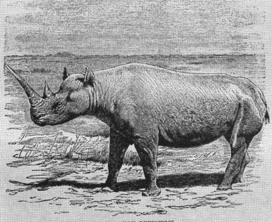 Lydekker 1901