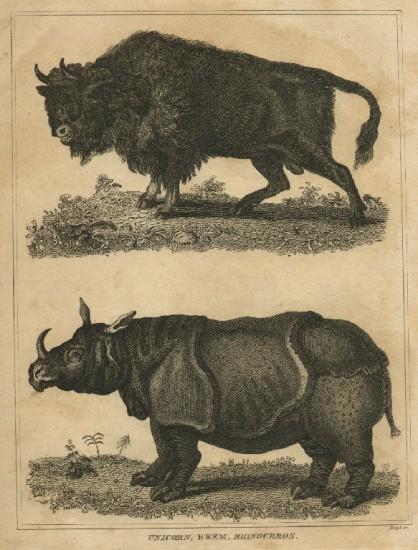 Buffon 1814