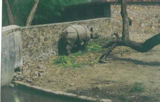 Delhi 1996