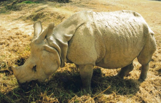 Gauhati 1996