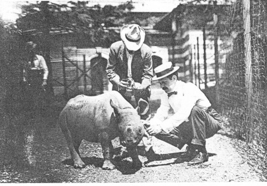 Shepstone 1911