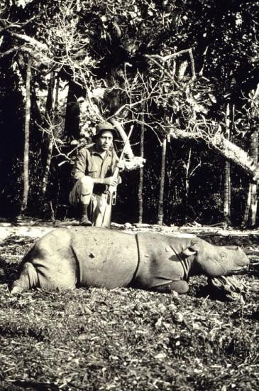 Hunter kills Sumatran Rhino