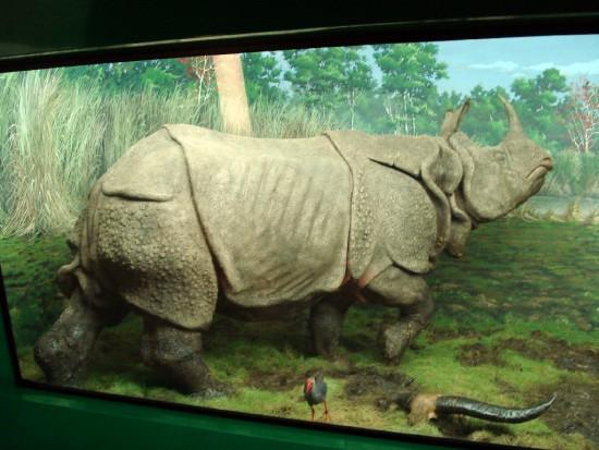 Indian Rhino Diorama