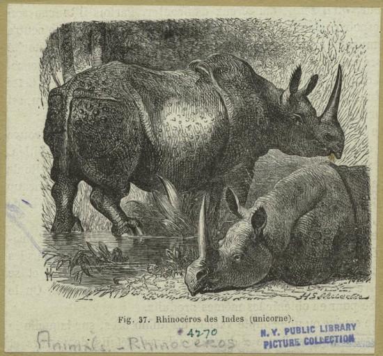 Figuier 1870