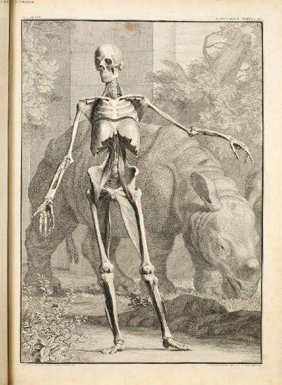 Albinus 1747