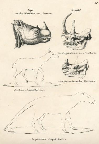 Sumatran rhino in Joh. Andreas Wagner book