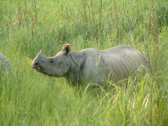 Chitwan 2006