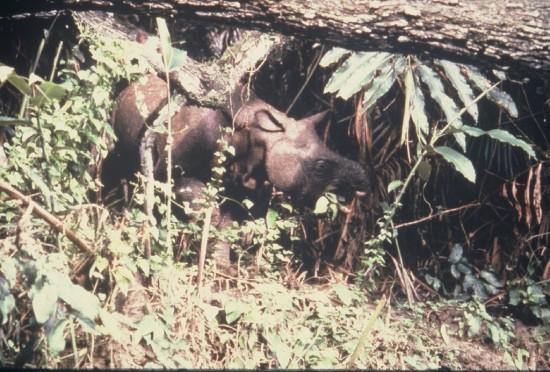 Nardelli Ujung Kulon