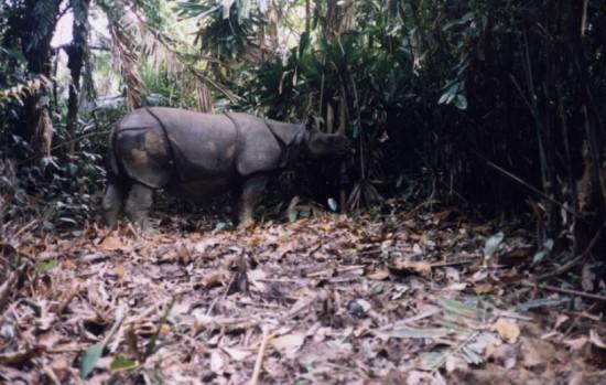 WWF photo trap