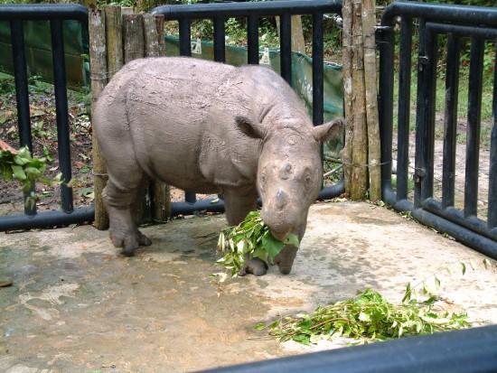 Feeding Bina