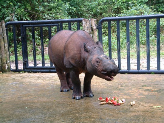 Bina feeding on fruit