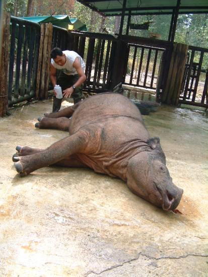 Sumatran Rhino Inspection