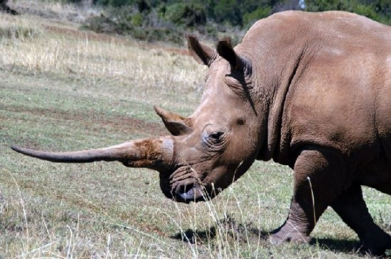 Mt Kenya Conservancy