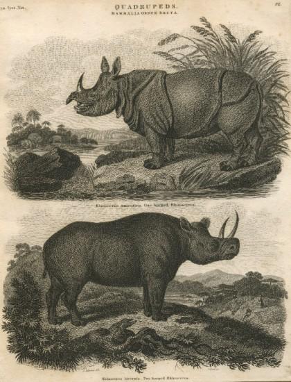 Abraham Rees' Cyclopedia