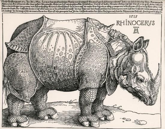 Durer's rhino 1515