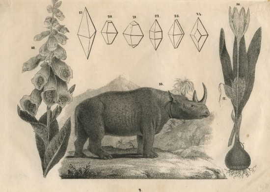 anonymous South African rhino
