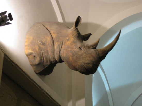Black rhino in Italy