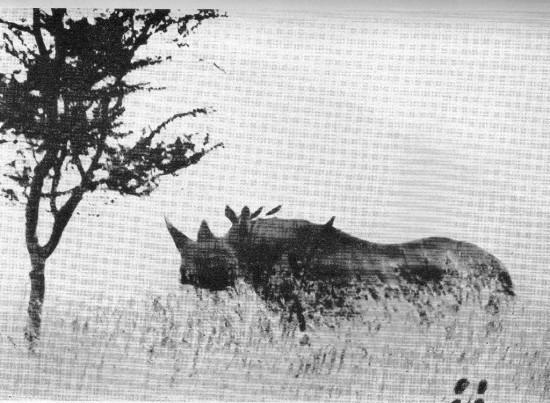 Msaragba 1940