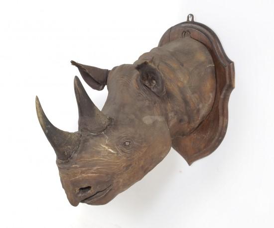 Black rhino 1915