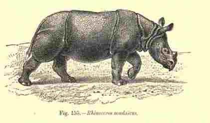 Blanford sondaicus