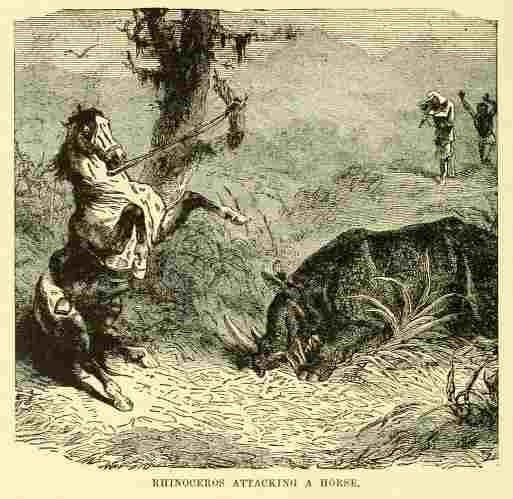 Rhino and horse