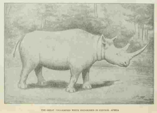 White rhino 1910
