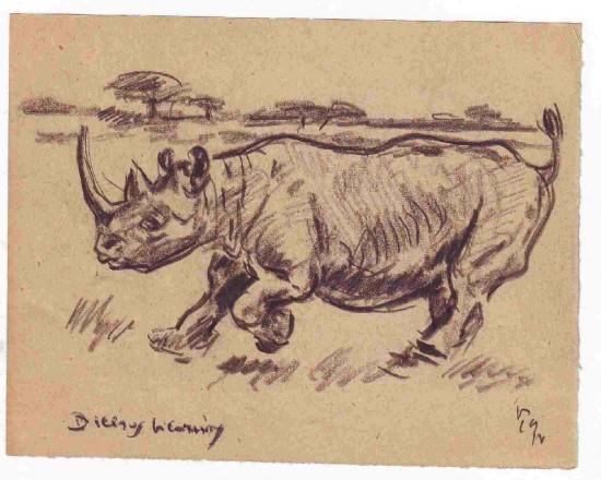 Black rhino running