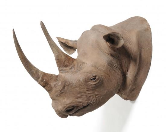 Mounted rhino 1930