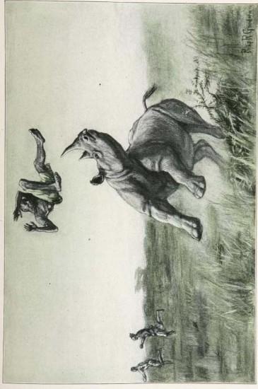 Roosevelt 1913
