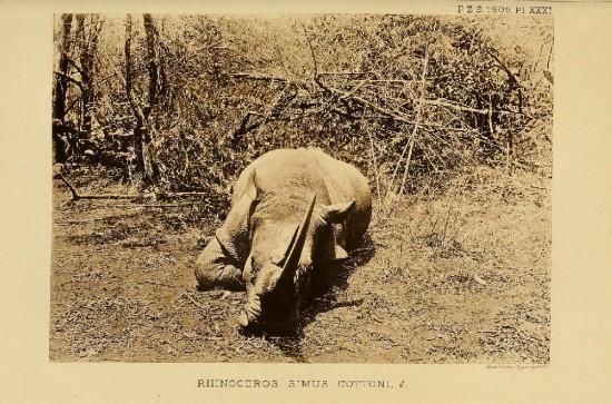 Trouessart 1909 pl.3